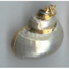 Gold plated snail shell